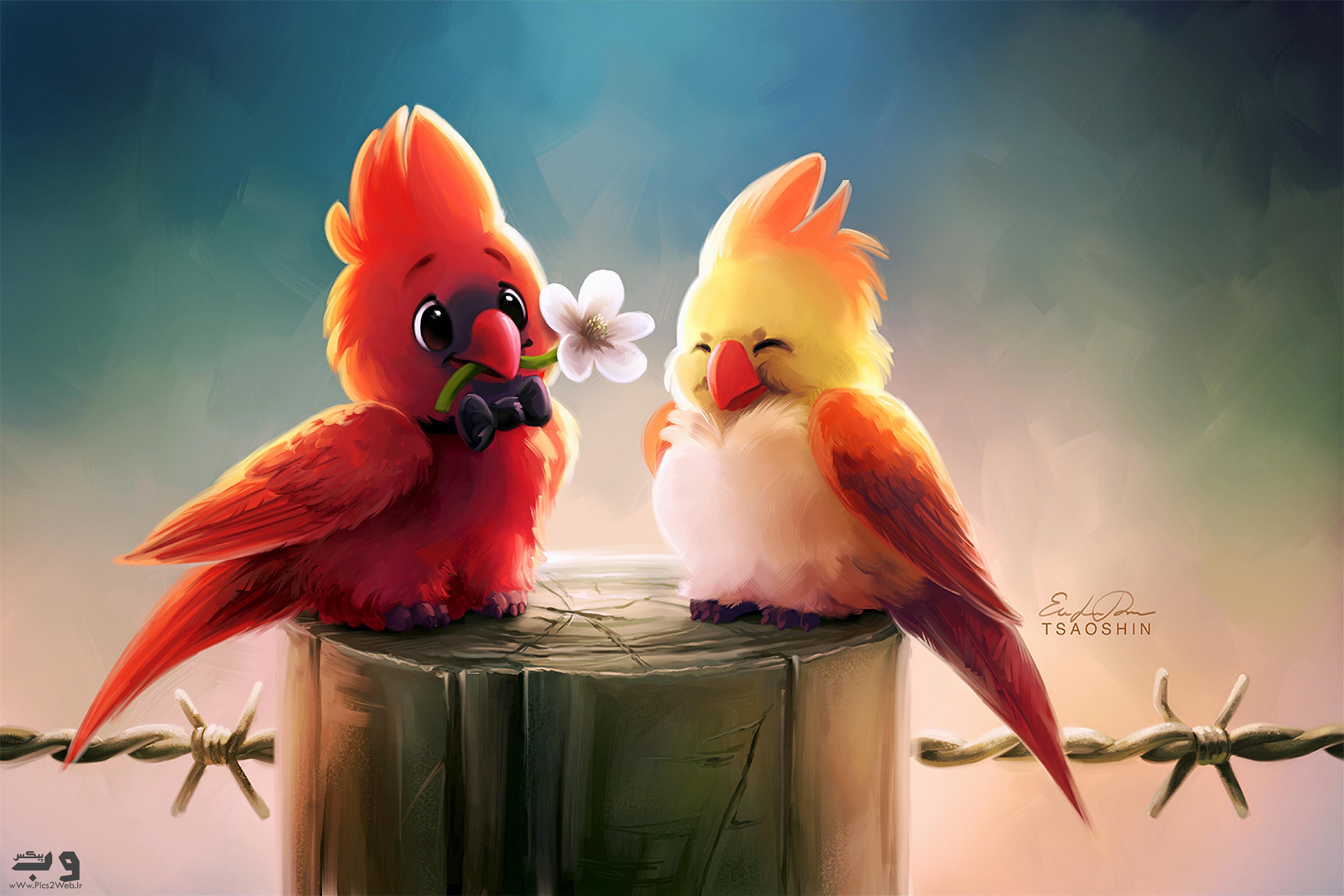 عکس پرندگان بامزه رومانتیک